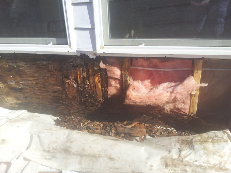 Dry Rot Repair Dry Rot Remediation Services Water